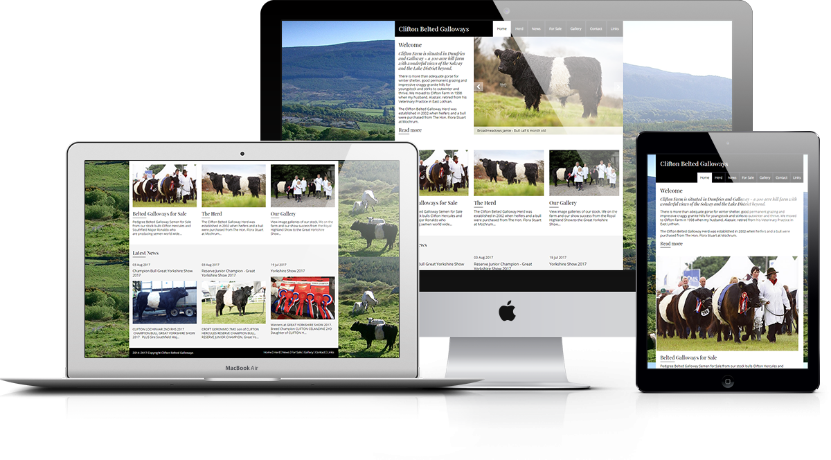Clifton Belted Galloways Responsive Display