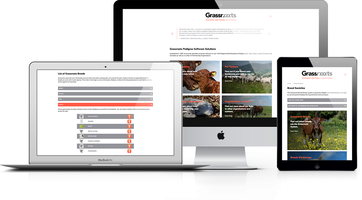 Grassroots Responsive Display